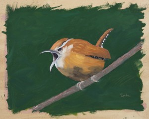 Mad Carolina Wren SOLD