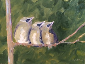 Cedar Waxwings Fledglings SOLD