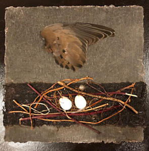 Dove Nest On Ledge  SOLD