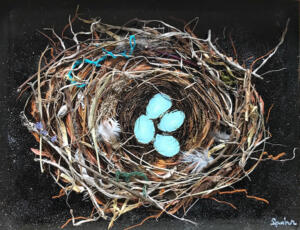 Robin Nest in Spring
